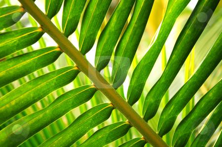 Tropical leaf stock photo, Closeup of green leaf of tropical plant by Elena Elisseeva