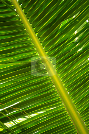 Tropical leaf stock photo, Closeup of a green palm tree leaf by Elena Elisseeva