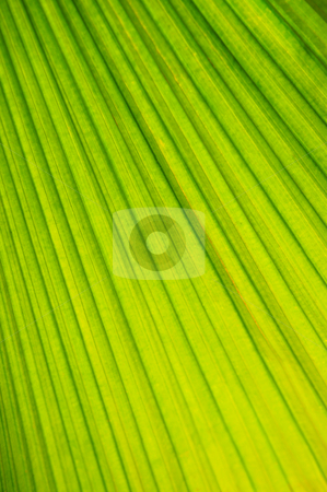 Palm tree leaf background stock photo, Botanical abstract background of green leaf of tropical plant by Elena Elisseeva