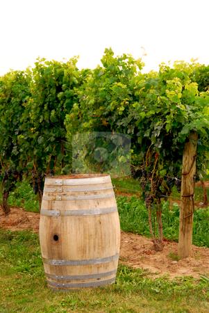 Wine barrel at vineyard stock photo, Old wine barrel at vineyard by Elena Elisseeva