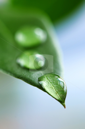 Green leaf with water drops stock photo, Macro of a green leaf with water drops by Elena Elisseeva