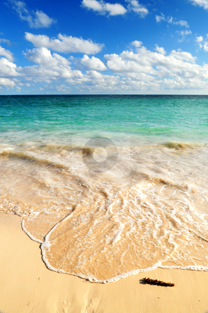 Tropical beach  stock photo, Tropical sandy beach with advancing wave and blue sky by Elena Elisseeva