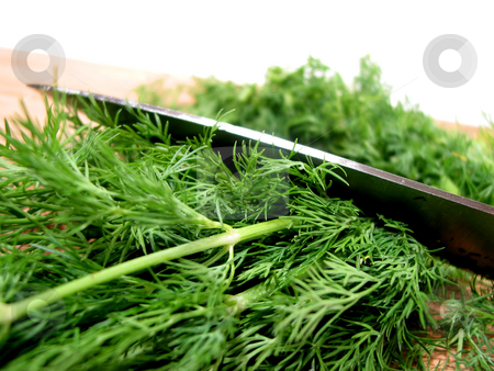 Dill herb cut stock photo, Cutting fresh dill on a cutting board, white background by Elena Elisseeva