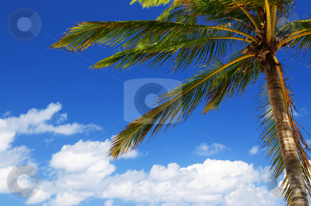 Palm on blue sky background stock photo, Palm tree canopy on blue sky background by Elena Elisseeva