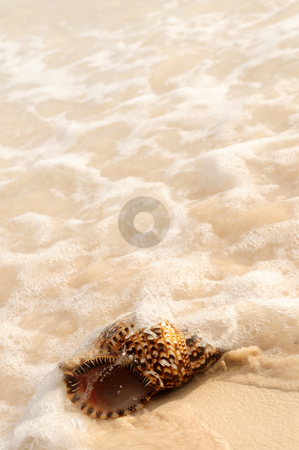 Seashell submerged by ocean wave stock photo, Seashell and ocean wave on sandy tropical beach by Elena Elisseeva