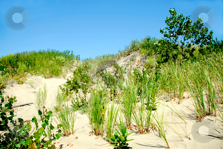 Sand dunes stock photo, Sand dunes and blue sky by Elena Elisseeva