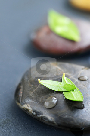 Zen stones stock photo, Zen stones submerged in water with green leaves by Elena Elisseeva