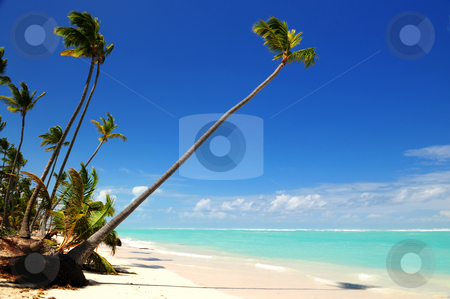 Tropical beach stock photo, Pristine tropical beach with palm trees on Caribbean island by Elena Elisseeva