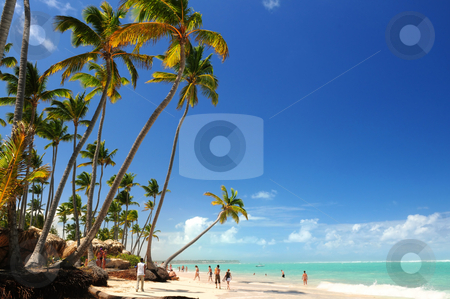 Tropical beach stock photo, Tropical beach with palm trees on Caribbean island by Elena Elisseeva