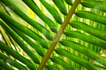 Tropical leaf stock photo, Closeup of a sunlit green palm tree leaf by Elena Elisseeva
