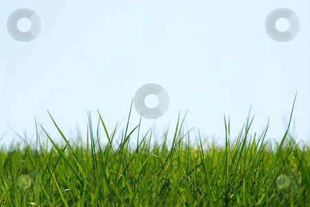 Grass sky background stock photo, Background of grass and sky by Elena Elisseeva