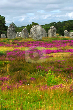 Megalithic monuments in Brittany stock photo, Heather blooming among prehistoric megalithic monuments menhirs in Carnac area in Brittany, France by Elena Elisseeva