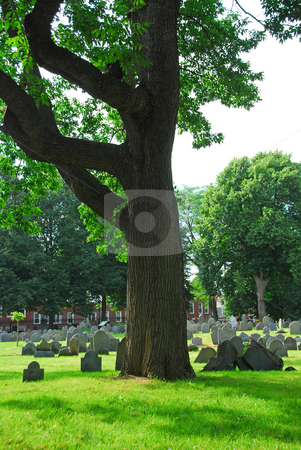 Old cemetery stock photo, Old cemetery in Boston by Elena Elisseeva
