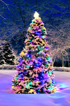 Christmas tree outside stock photo, Decorated christmas tree outside with lights covered with snow by Elena Elisseeva