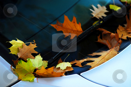 Fall leaves on a car stock photo, Fallen autumn leaves on the windshield of a car by Elena Elisseeva