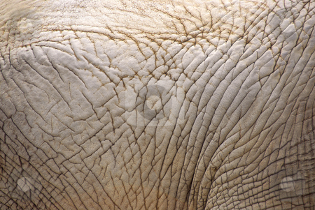 Elephant skin stock photo, Background of an african elephant skin texture by Elena Elisseeva