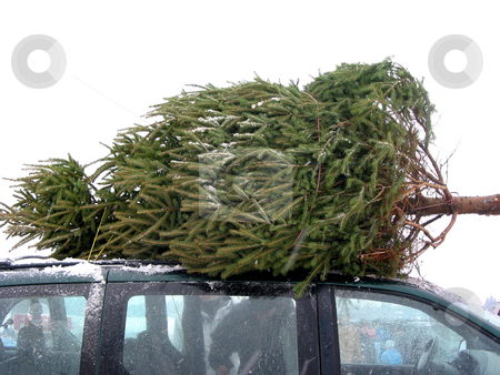 Huge Christmas tree  stock photo, Huge Christmas tree tied to the roof on a minivan by Elena Elisseeva