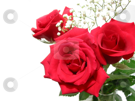 Rose bouquet on white stock photo, Bouquet of three red roses on white background, space for copy by Elena Elisseeva
