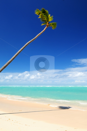 Tropical beach stock photo, Pristine tropical beach with palm tree in Dominican Republic by Elena Elisseeva