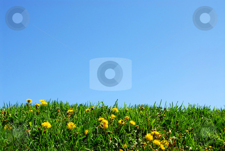 Grass and sky background stock photo, Background of grass and sky by Elena Elisseeva