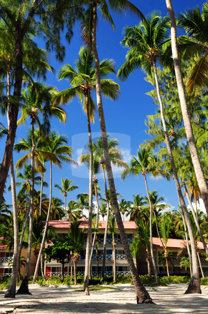 Tropical resort stock photo, Palm trees surrounding a hotel at tropical resort in Dominican Republic by Elena Elisseeva