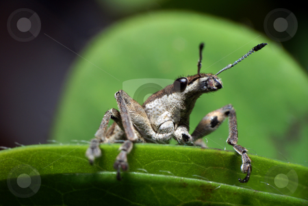 Insect stock photo, Insect in a plant by Humberto Ramos