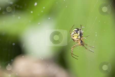 Small spider stock photo, Small spider by Humberto Ramos