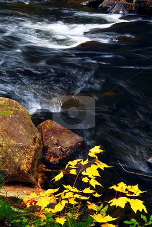 Forest river in the fall stock photo, Forest river in the fall. Algonquin provincial park, Canada. by Elena Elisseeva