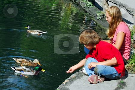 Children feeding ducks stock photo, Children feeding ducks at the pond in a park by Elena Elisseeva