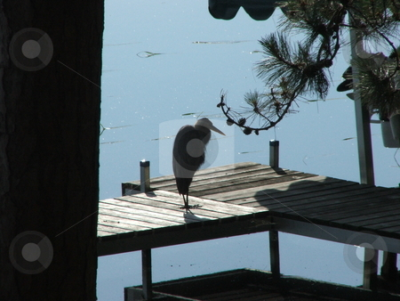 Timeout stock photo, A gray heron rests on the end of a dock. by Dennis Thomsen
