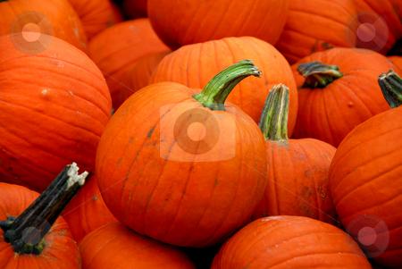 Pumpkins stock photo, Bright orange cooking pumpkins for sale by Elena Elisseeva