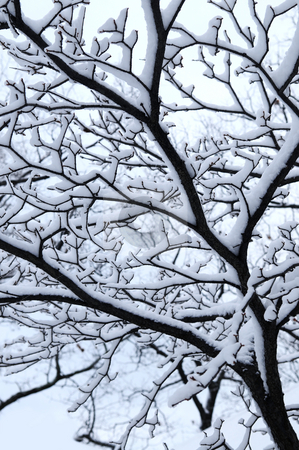 Snowy branch stock photo, Branch of a winter tree covered with snow by Elena Elisseeva