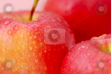 Red apples stock photo, Three red apples with water droplets close up by Elena Elisseeva