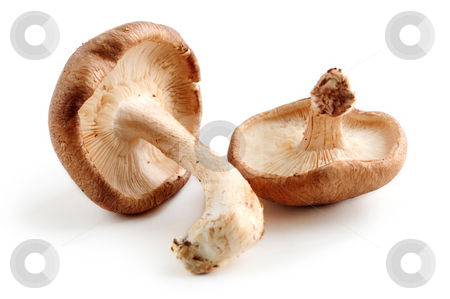 Shiitake mushrooms stock photo, Two fresh shiitake mushrooms isolated on white background by Elena Elisseeva