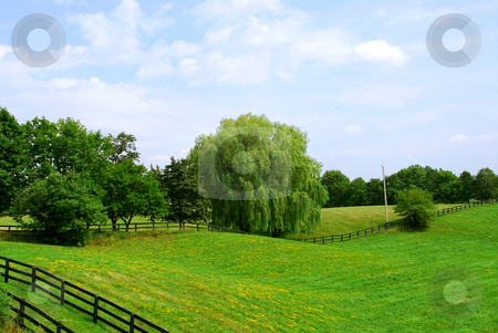 Rural landscape stock photo, Rural landscape of lush green fields and trees by Elena Elisseeva