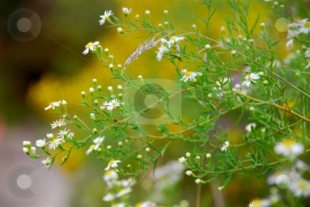 Wild daisies stock photo, Wild daisies on the side of a road by Elena Elisseeva