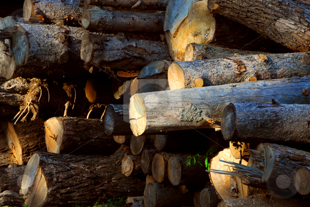 Wood logs stock photo, Background of stacked logs lit by evening sun, side view by Elena Elisseeva