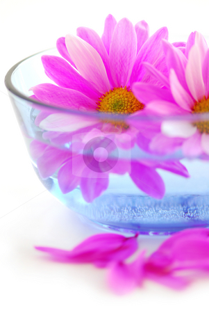 Pink flowers stock photo, Pink flowers close up floating in water by Elena Elisseeva