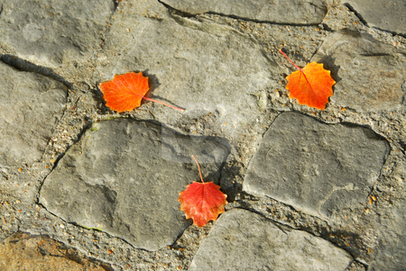Pavement stock photo, Background of old cobblestone pavement with autumn leaves by Elena Elisseeva