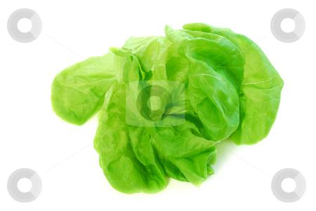 Boston lettuce stock photo, Head of green fresh boston lettuce isolated on white background by Elena Elisseeva