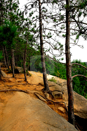 Pines on cliffs stock photo, Forest path on pine cliffs in Algonquin provincial park, Canada by Elena Elisseeva