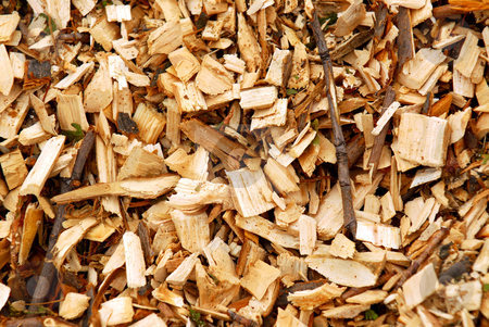 Wood chips stock photo, Background of freshly made yellow wood chips by Elena Elisseeva