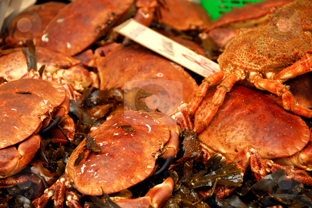 Crabs stock photo, Live crabs on ice for sale at food market by Elena Elisseeva