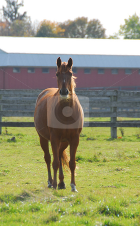 Horse stock photo, Beautiful brown stallion on a ranch meadow by Elena Elisseeva