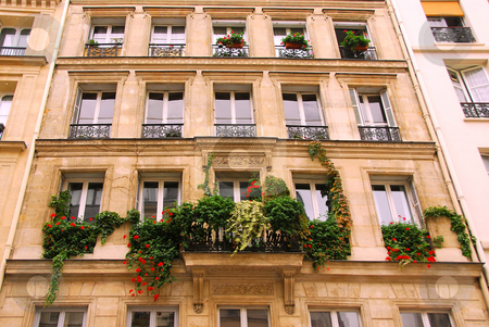 Windows with ivy stock photo, Windows and balacony covered by ivy on a building in Paris France by Elena Elisseeva