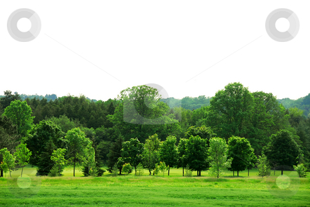 Green forest stock photo, Natural background of young green forest with white copy space by Elena Elisseeva