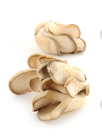 Oyster mushrooms stock photo, Clusters of oyster mushrooms isolated on white background by Elena Elisseeva