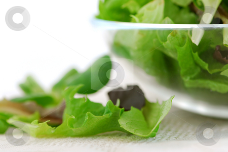 Baby greens stock photo, Fresh baby greens salad serving close up by Elena Elisseeva