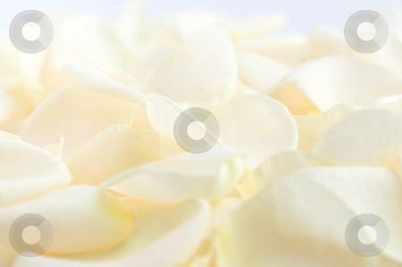 Pale rose petals stock photo, Abstract background of fresh pale rose petals by Elena Elisseeva