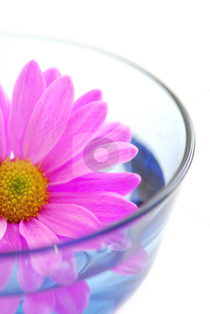 Pink flower stock photo, Closeup of pink flower blossom floating in water by Elena Elisseeva